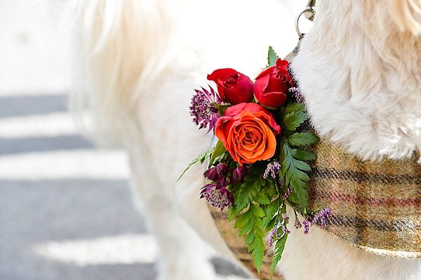 Real Wedding Berwick Lodge // Autumn Fall Colours // Bristol Florist // Emerald & Jade Flowers // Interlace Photography // pets at weddings