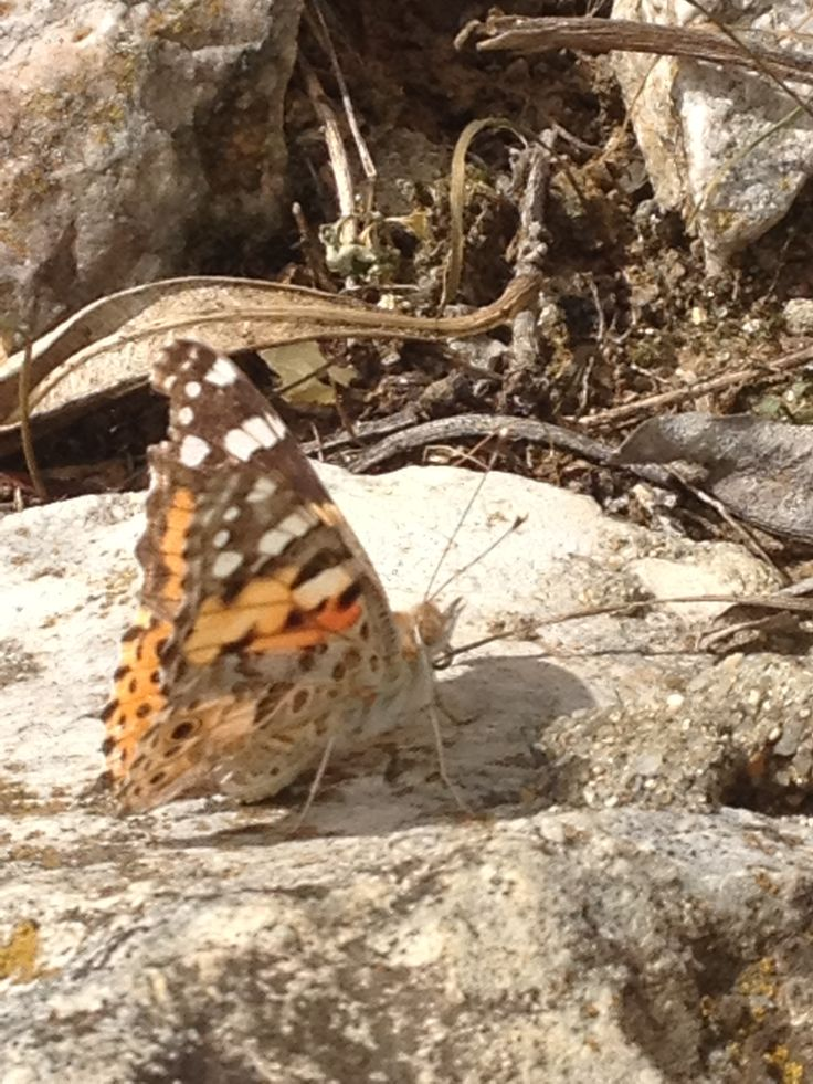 butterfly effect / efeito borboleta