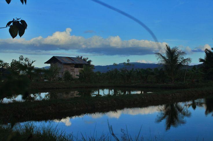 Perkebunan di Konda, Kendari, Sulawesi Tenggara, Indonesia