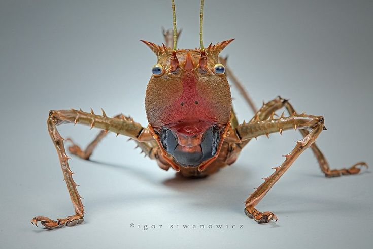 """""""Portrait"""" by macro-photographer Ivan Siwanowicz from the """"Aliens from Other Worlds"""" series.... looks like a grasshopper, no?"""