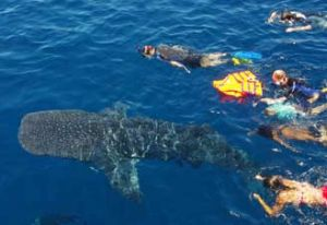Cham Island Diving Hoi An