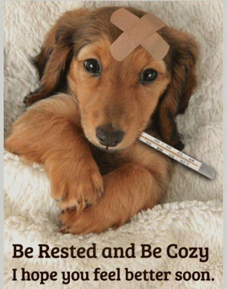 Beterschap hond feel better quotes get well soon funny