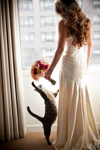 Your furry friend is part of the family, so why shouldn't they be part of your big day? From adorable photo opportunities to personalised cake toppers, be inspired by our pet-friendly wedding ideas!