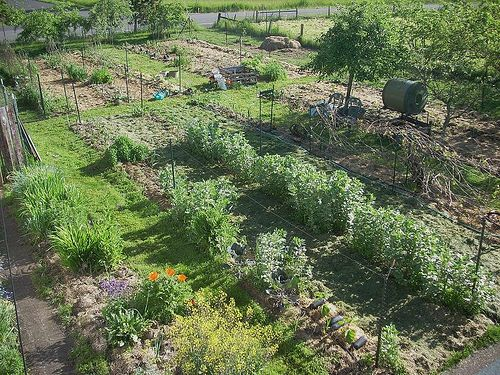 https://flic.kr/p/6p6j9E   The busy time   The busy time. Foreground: kale going to seed for seed saving. Center rows: Broadbeans, ditto. Upper right, beyond grape arbor: compost barrel and rest station (lawn chairs); upper center, compost bin and mixing station.  risashome.blogspot.com/