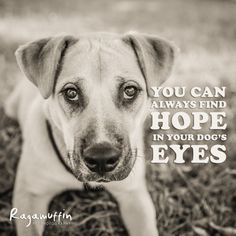 118 best images about dog quotes on pinterest friendship