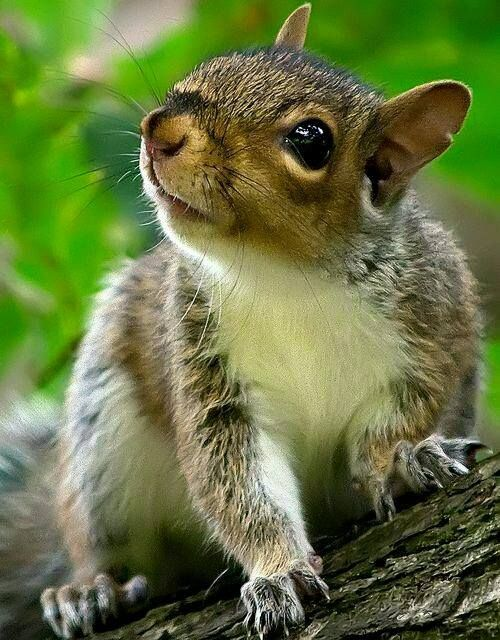 Did somebody mention nuts?