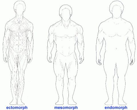 Muskelaufbau Teil II Körpertypen – Endomorph - Mesomorph