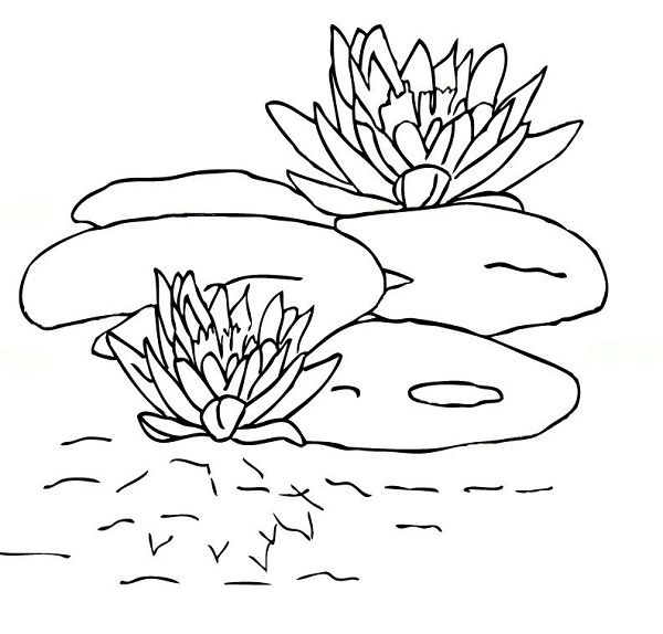 Tolle Lily Pad Blume Malvorlagen Bilder - Ideen färben - blsbooks.com