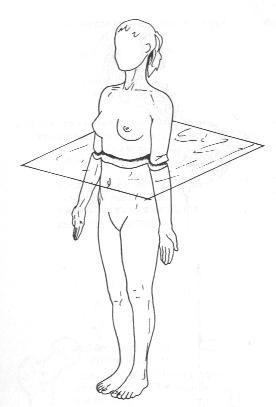 Posición anatómica SUPERIOR / CRANEAL. La parte de arriba del cuerpo.