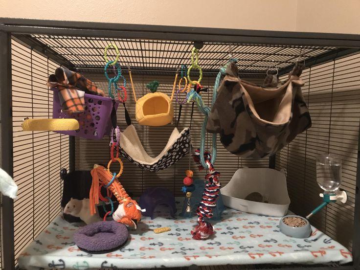 MTV Cribs where you at? #aww #cute #rat #cuterats #ratsofpinterest #cuddle #fluffy #animals #pets #bestfriend #ittssofluffy #boopthesnoot