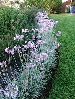 Ozbreed Instant Border & Flora Edge Landscape Gardening Plants