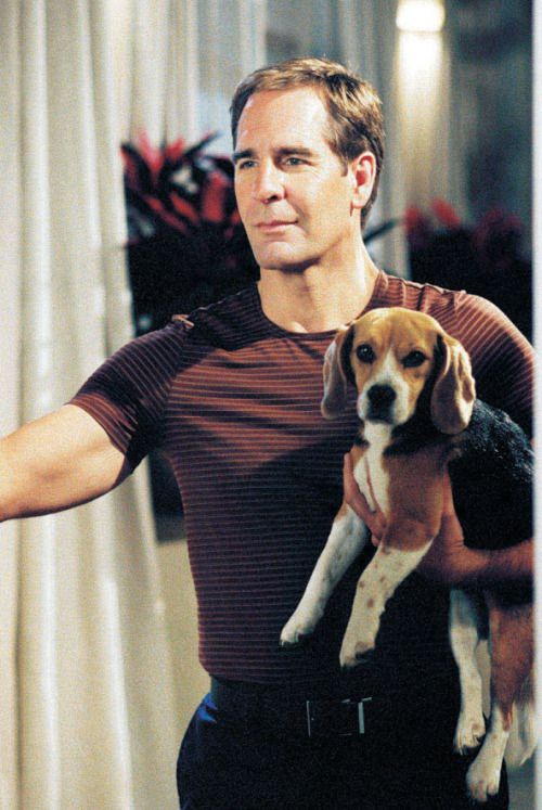 Porthus and Archer, ST Enterprise.  Promo shots. Two days and two nights. Porthos played by Breezy, Windy and Prada. attribution of animal actor info: http://www.startrek.com/article/porthos-had-it-ruff-on-enterprise