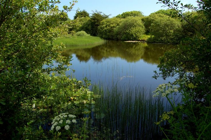 Top 25 ideas about farm ponds on pinterest gardens bass for Farm pond fish