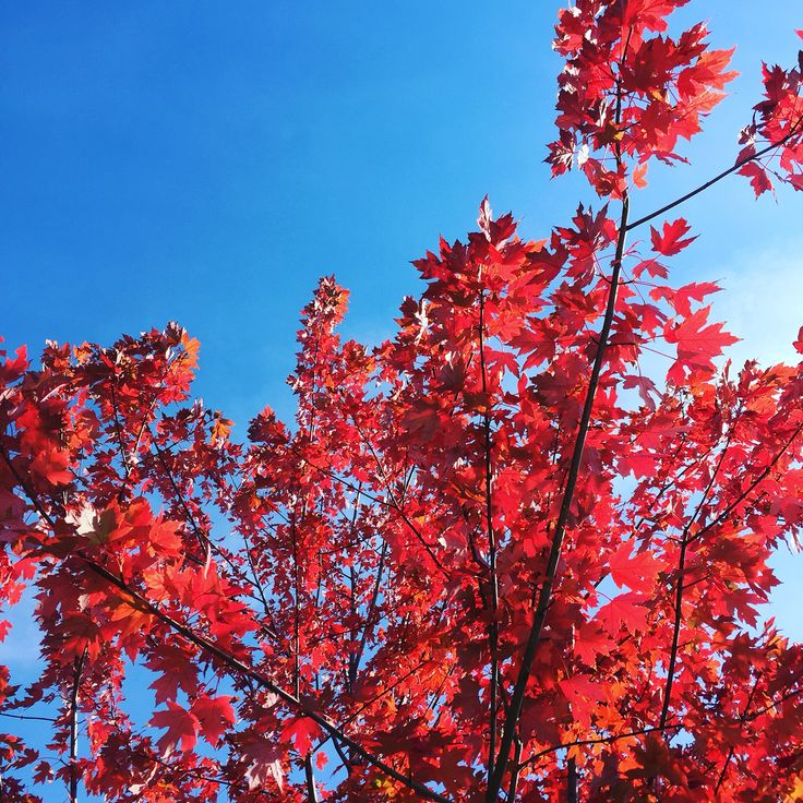 Toronto ... Autumn