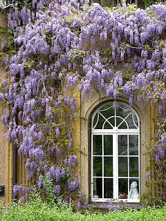 Wisteria house - Google Search