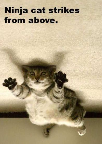 cat pics and captions | Silly Cat Pictures: Funny Cats With Captions-LOL Cats