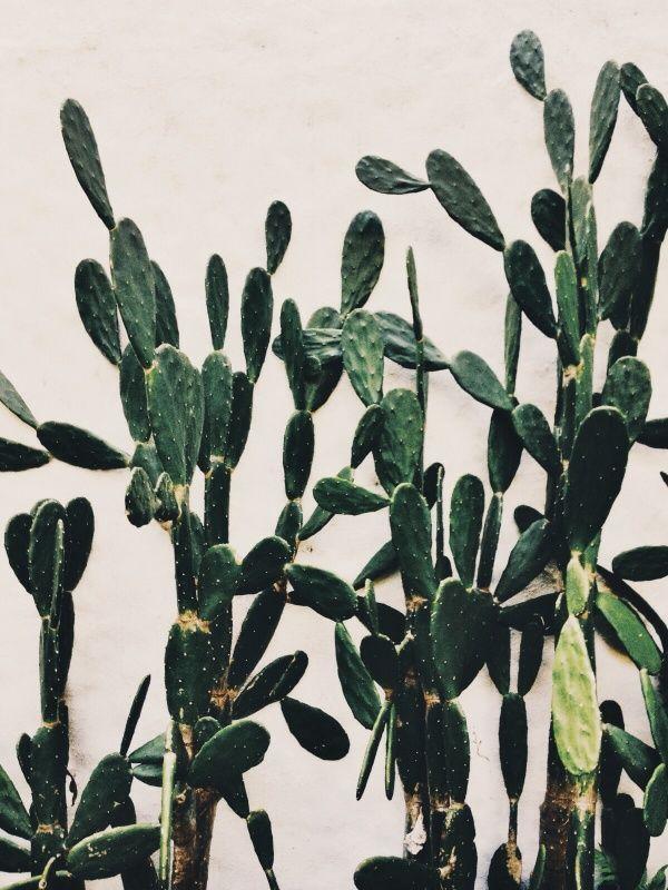 #flora #cacti #green