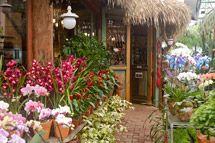 Chácara Tropical-Um Garden Center para você e toda família (plantas, artesanato e restaurante)