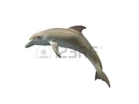 dolphin: Dolphin isolated on a white background