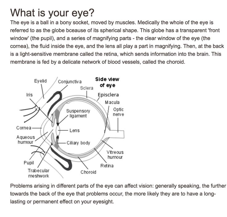 Optic neuritis degradation of the myelin sheath on the optic nerve, vitreous humour thinning caused by MS