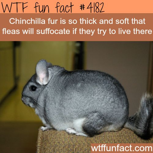 Another animal that is stuck being tortured for fur in the fur industry