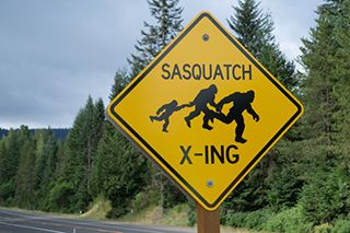 Comprehensive Car Insurance Coverage and Sasquatch