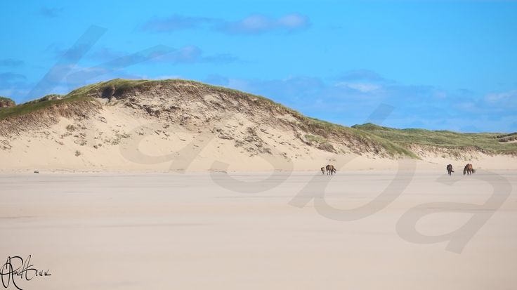 New Heights - Photography by Kasba Media/Rae-Anne Laplante of Sable Island, Nova Scotia