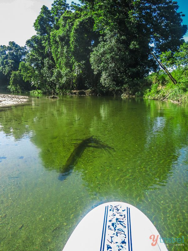 Stand Up Paddle Boarding (SUP) in Port Douglas, Queensland