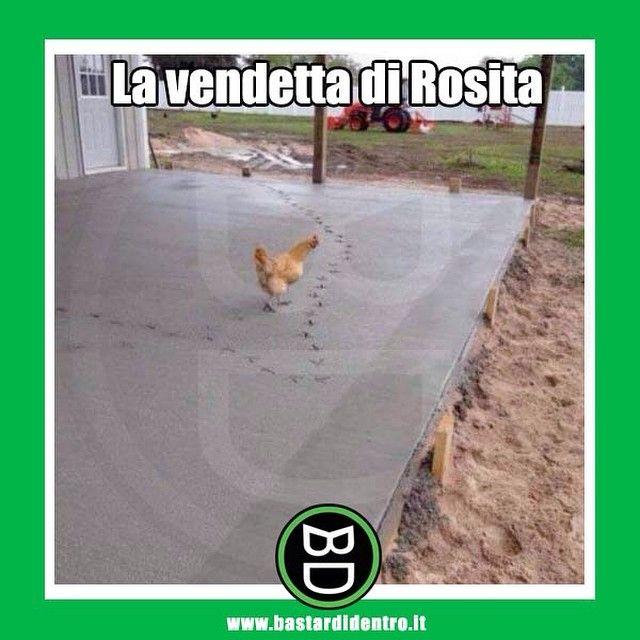 Sarà per via dei troppi #biscotti #bastardidentro #rosita #gallina www.bastardidentro.it