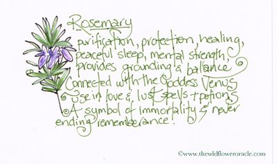 Rosemary Flower Message The Wildflower Oracle