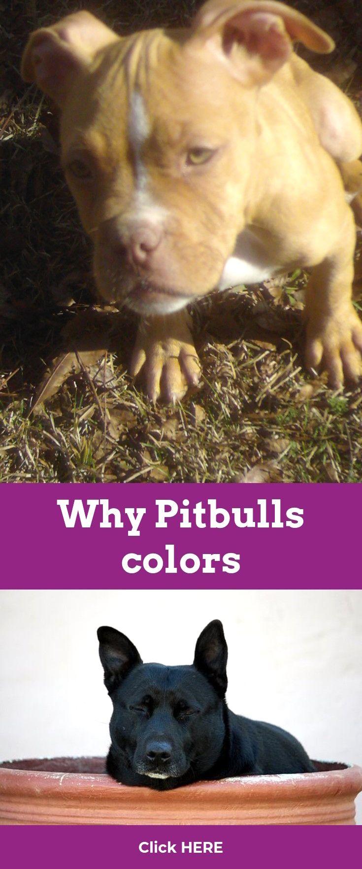 Pitbulls Red Nosed Pitbulls And Parolees Dvd Click Visit