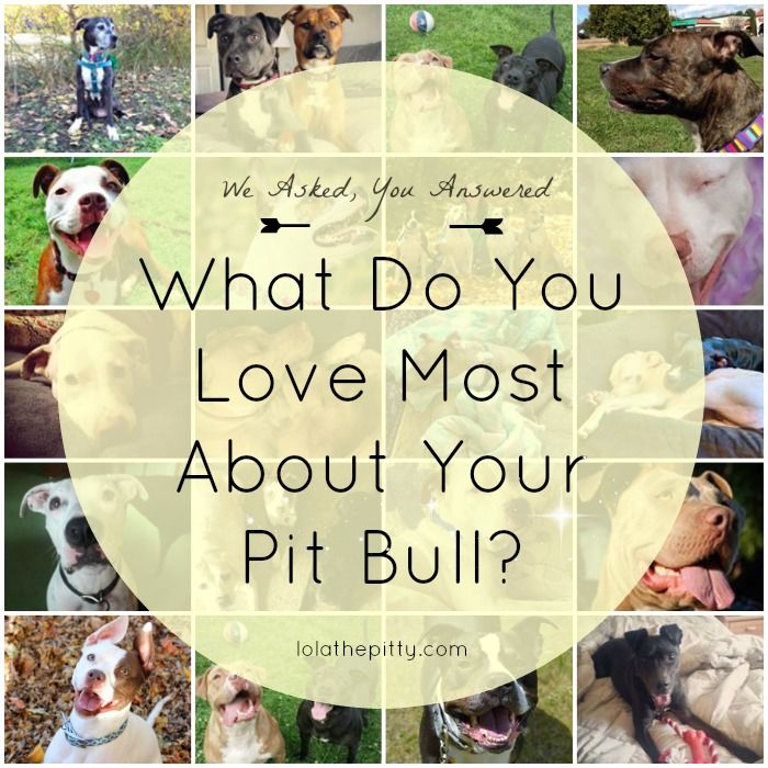 """So honored that my sweet pittie Ivy is included in: """"What Do You Love Most About YOUR Pit Bull"""""""