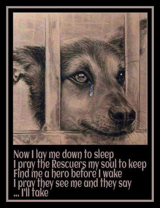 """please everyone: know that sometimes the euthanization date is moved because 1) shelter was busy 2) the shelter got last minute applications from people who pledge to adopt or foster or send $ if dog is kept fed/alive. Please don't go by dates. Until u see """"killed, euthanized, or gone"""" on the link, don't give up on the dog/cat. Check! Thanks. & Please adopt/rescue/foster."""