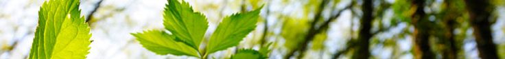 Take a leaf, then use this online tree identification guide to identify your tree.  Whole United States. (From Arbor Day Foundation website)