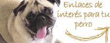 ATÚN DE LATA y huevo - (American Staffordshire Terrier) | Perros.com