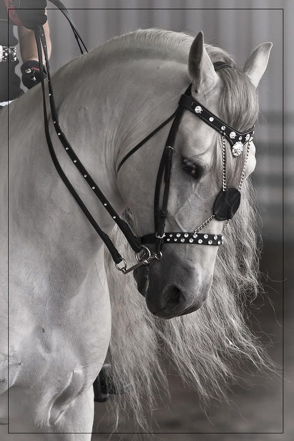 206 Best Images About Beautiful Tack On Pinterest | Horse ...