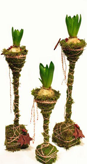 Hyacinter på höjden, med mossa och polkagris-snöre