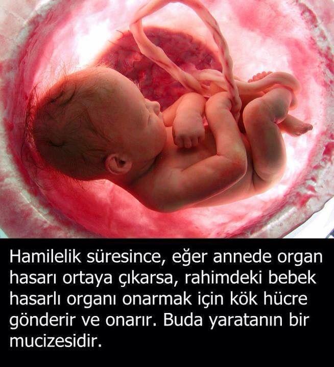 Hamileyken bebeğin kök hücresi anneyi tedavi eder Biliyor muydunuz? hergarenk
