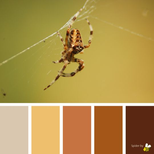 Spider palette by BeeBox (ONLY FOR PERSONAL USE!)