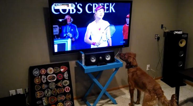 Dog REALLY Loves Watching Tennis on TV (VIDEO)