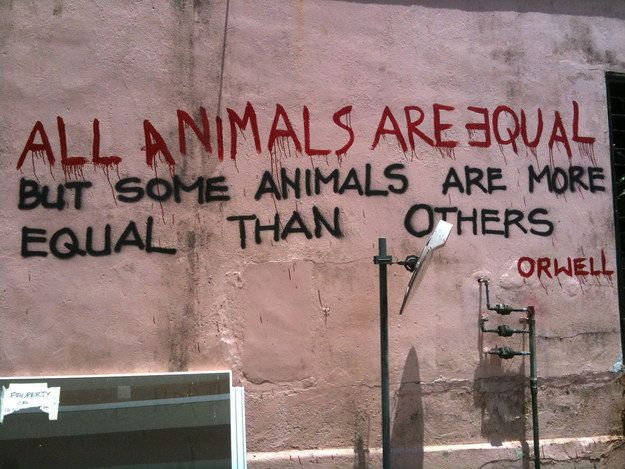 28 Brilliant examples of clever literary graffiti and street art Animal Farm – George Orwell. Singapore.
