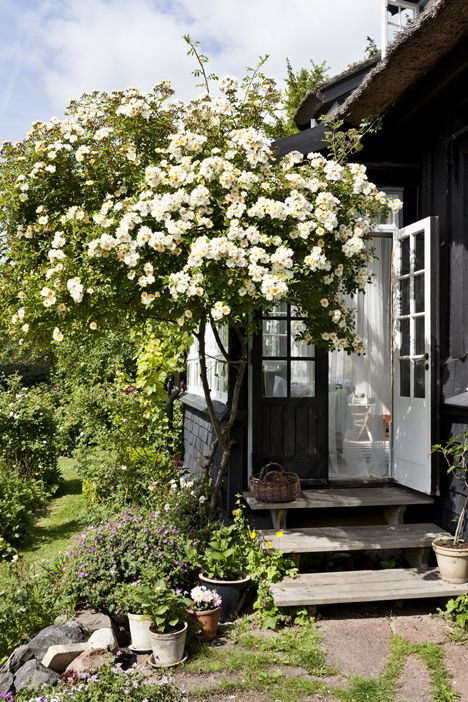 Summer house- One of my guesthouses in full bloom on the grounds of my cottage