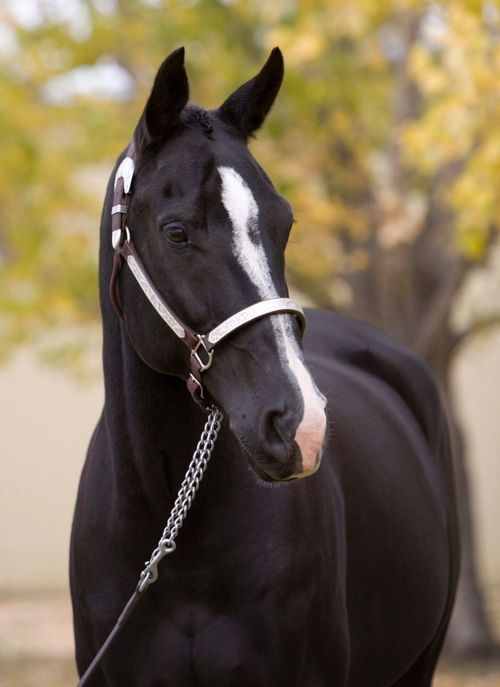 Body clipped? Yes, it appears so to me. How many of you do this to your horses before showing?