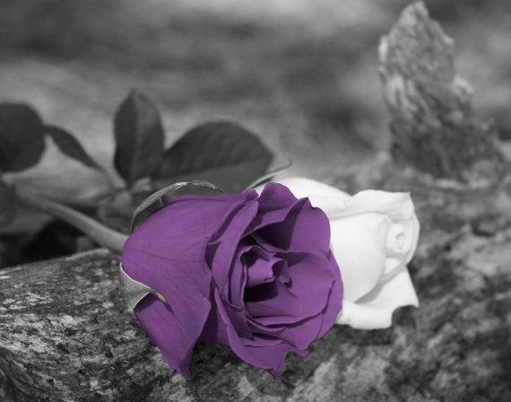 Black White Purple Rose Flower Wall Art By