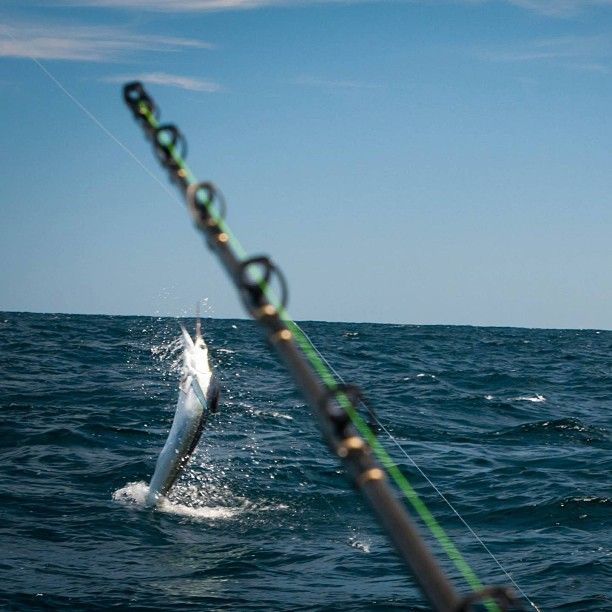 Great photo from pat ford at obx fishing outerbanks for Surf fishing outer banks
