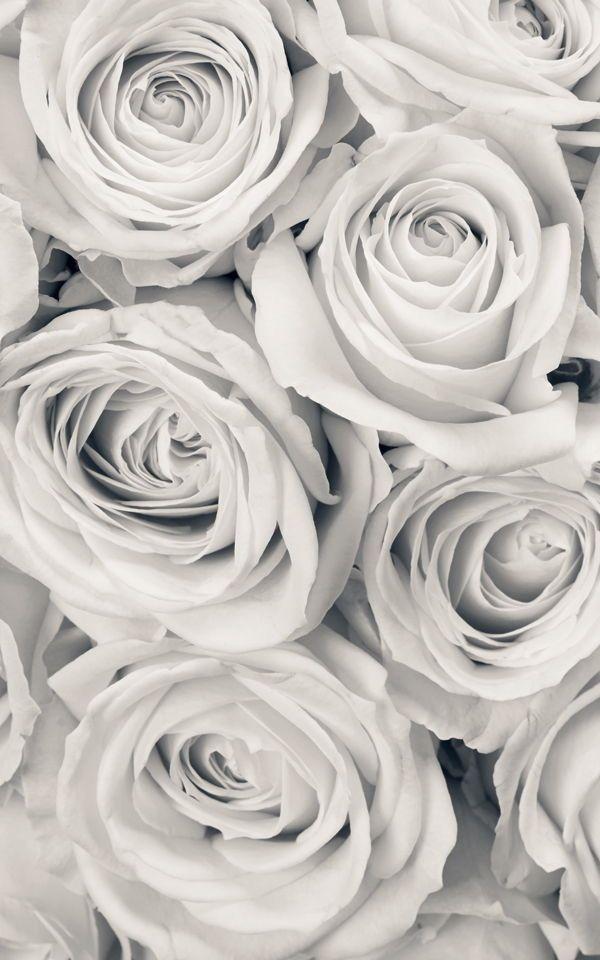 Epingle Par Austin Bender Sur White En 2020 Fond D Ecran Telephone Fond D Ecran Iphone Fleur Bouquet De Roses Blanches