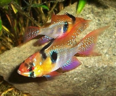 78 Best Images About Acuariosypeces Es On Pinterest