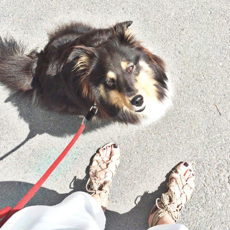 Tall Girl's Fashion // Nelly The Shetland Sheep Dog