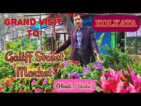 Galiff Street Plants Market Dekhiye Kolkata Ki Best Nursery