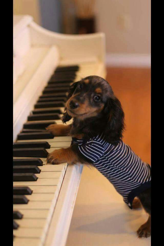 Hey, I'm just learning! ==> visit http://www.amazingdogtales.com/gifts-for-dachsund-lovers/